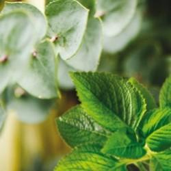 Eucalyptus Mint Sachets