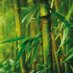 Black Bamboo Sachets